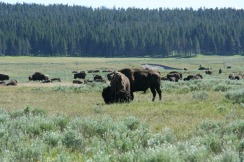 Yellowstone 2010-07-23 044