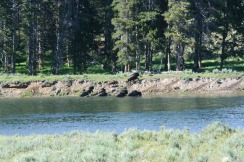 Yellowstone 2010-07-23 064