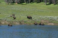 Yellowstone 2010-07-23 072