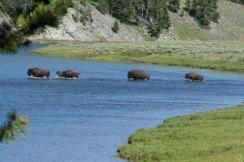 Yellowstone 2010-07-23 074