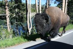 Yellowstone 2010-07-23 087