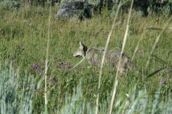 Yellowstone 2010-07-23 100