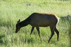 Yellowstone 2010-07-23 105