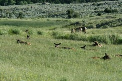 Yellowstone 2010-07-23 106