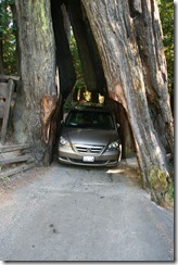 Drive Through Tree 2011-08-22 006