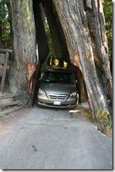 Drive Through Tree 2011-08-22 006