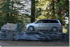 Drive Through Tree 2011-08-22 023