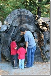 Drive Through Tree 2011-08-22 046