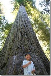 Redwoods Day 2 2011-08-23 007