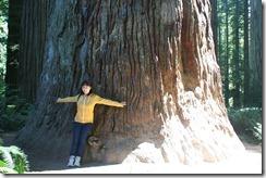 Redwoods Day 2 2011-08-23 079