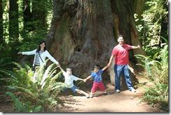 Redwoods Day 2 2011-08-23 084