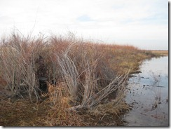 Duck Hunting 2011-11-22 004