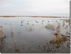Duck Hunting 2011-11-22 005