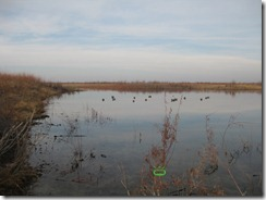 Duck Hunting 2011-11-22 006